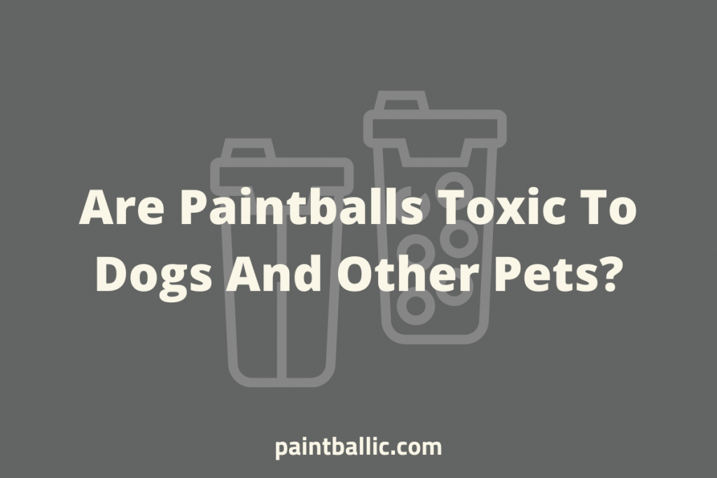Are Paintballs Toxic To Dogs